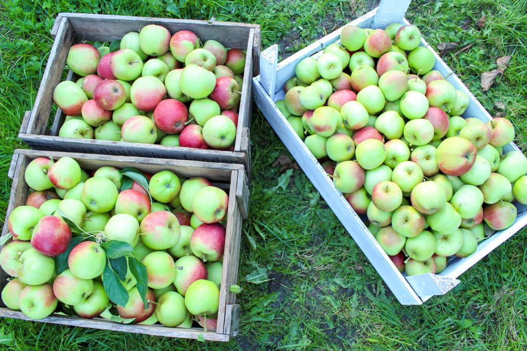 The best apple pie - vegan, gluten-free, dairy-free